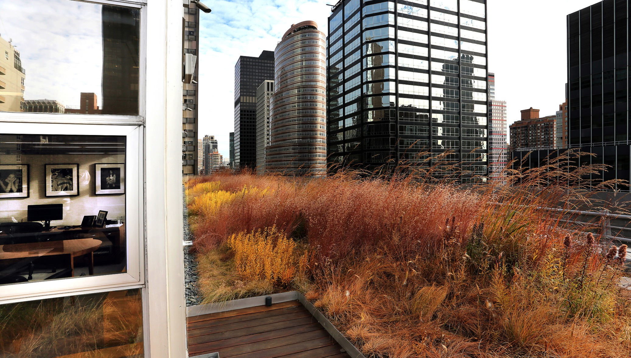 Green Roof_Autumn Fall_Midtown Manhattan